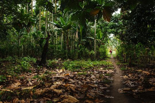 Jungle Path in Papua New Guinea