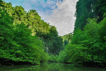 landscape of mountain and   mangrove forest , Krabi ,Thailand