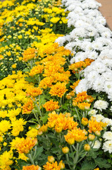 colorful flowers group background