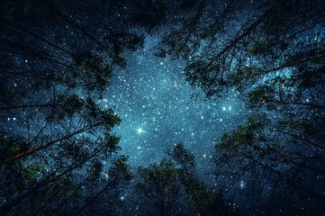 Aluminium Prints Night Beautiful night sky, the Milky Way and the trees. Elements of this image furnished by NASA.