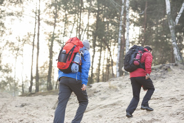 Male backpackers walking in forest