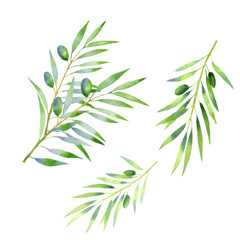 olive branch watercolor. isolated on white background. Hand drawn decorative elements for food design, textile, paper, wrapping