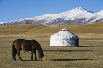 Nomads horse and yurt, Bayanbulak, Xinjiang Province, China, Asia