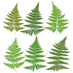 A set of six images of silhouettes of ferns. Vector.