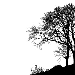 Tree without Leaves Vector Illustration, EPS 10.