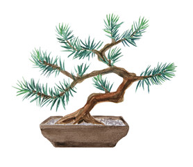 Bonsai pine tree painted with watercolor