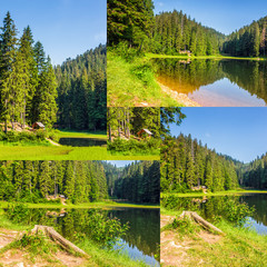 image set of spruce forest around the lake in mountains