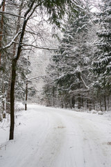 Snow covered trees along the roadside in the winter forest
