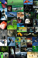 A collage of wildlife photographs is seen here to be used as a graphic element or background