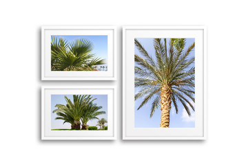 Group of frames with pictures of palms. Travel motif decor