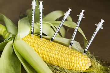 Concept,  GMO Corn