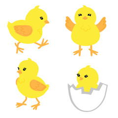 Set of cute little chickens in different poses. Hand drawn yellow chicks isolated on white. Vector illustration.