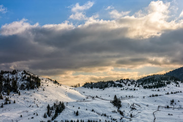 spruce forest on snowy meadow
