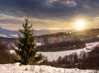 spruce tree on snowy meadow in mountains at sunset