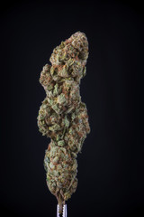 Detail of dried cannabis flower (god bud strain) isolated over b