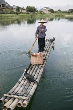 Fisherman with cormorants, Li River, Yangshuo, Guangxi Province, China