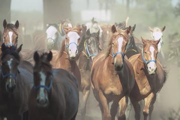 Herd of mares galloping toward us.