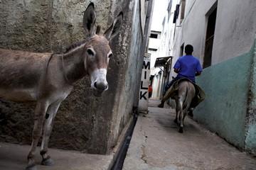 The narrow streets of Lamu Town, Lamu, Kenya, East Africa, Africa