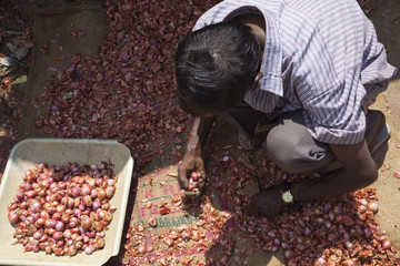 Onion seller sorting his stock on the street in Munnar, Kerala, India, Asia