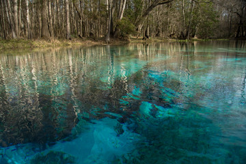 The crystal clear water of Blue Spring, north Florida.