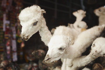 Stuffed baby llamas in Witches' Market, La Paz, Bolivia, South America