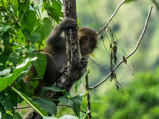 Baby Macaque in the Jungle