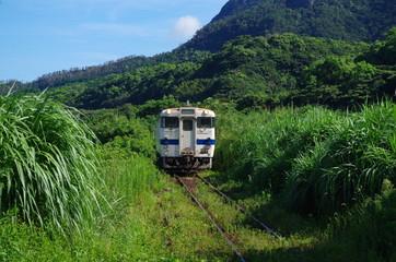 草むらと普通列車