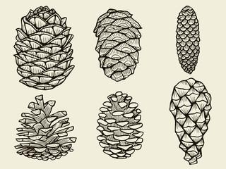 Pine cones of cedar spruce fir christmas tree