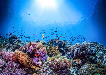 Underwater world landscape