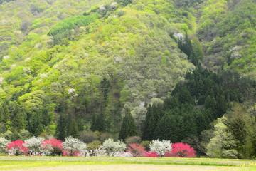 花桃の里 長野県にある花桃の里
