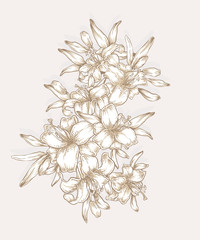 Hand drawn lily flowers. Decorative royal lilies composition.