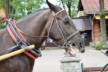 Rżący koń - fototapety na wymiar