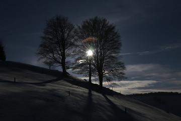 Baum im gegenlicht im Schwarzwald
