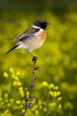 Slim bird on a slim branch