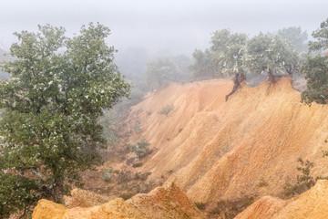 Bosque de encinas y cárcavas de arcilla. Quercus ilex.