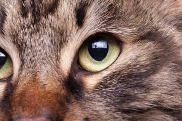 Gorgeous cat eye in close up image