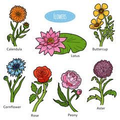 Vector set of flowers, color collection
