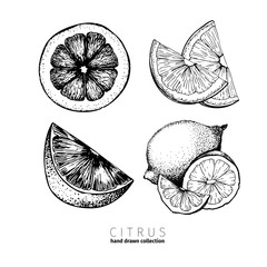 Vector set of citrus fruits. Orange, lemon, lime and bloody orange slices. White background. Hand drawn ink icons.