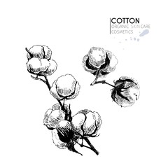 Vector set of skin care ingredients. Organic hand drawn elements. Cotton branch.