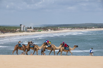 Camel riding in the famous sand dunes of Natal, Rio Grande do Norte, Brazil, South America