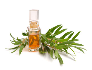 Melaleuca essential oil in the pharmaceutical bottle with twigs.