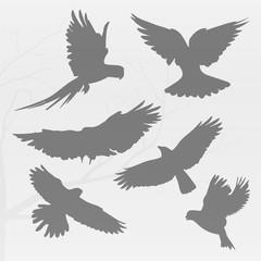 A lot of black birds