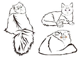 cat animal contour drawing creative blue image