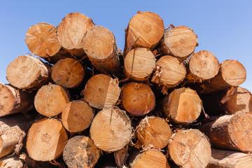 Forestry Trees Logs Harvest stacks on mountain landscape