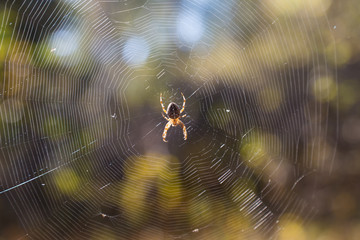 cobweb with spider