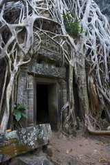 Tree roots around entrance to Ta Prohm temple built in 1186 by King Jayavarman VII, Angkor, UNESCO World Heritage Site, Siem Reap, Cambodia, Indochina, Southeast Asia, Asia