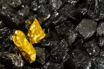 Golden nugget on raw coal nuggets, black gold, natural gold