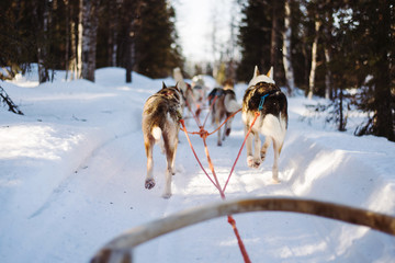 view from a dog sled