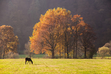 Pferd auf herbstlicher Koppel