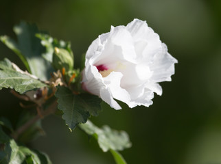 beautiful white flower in nature